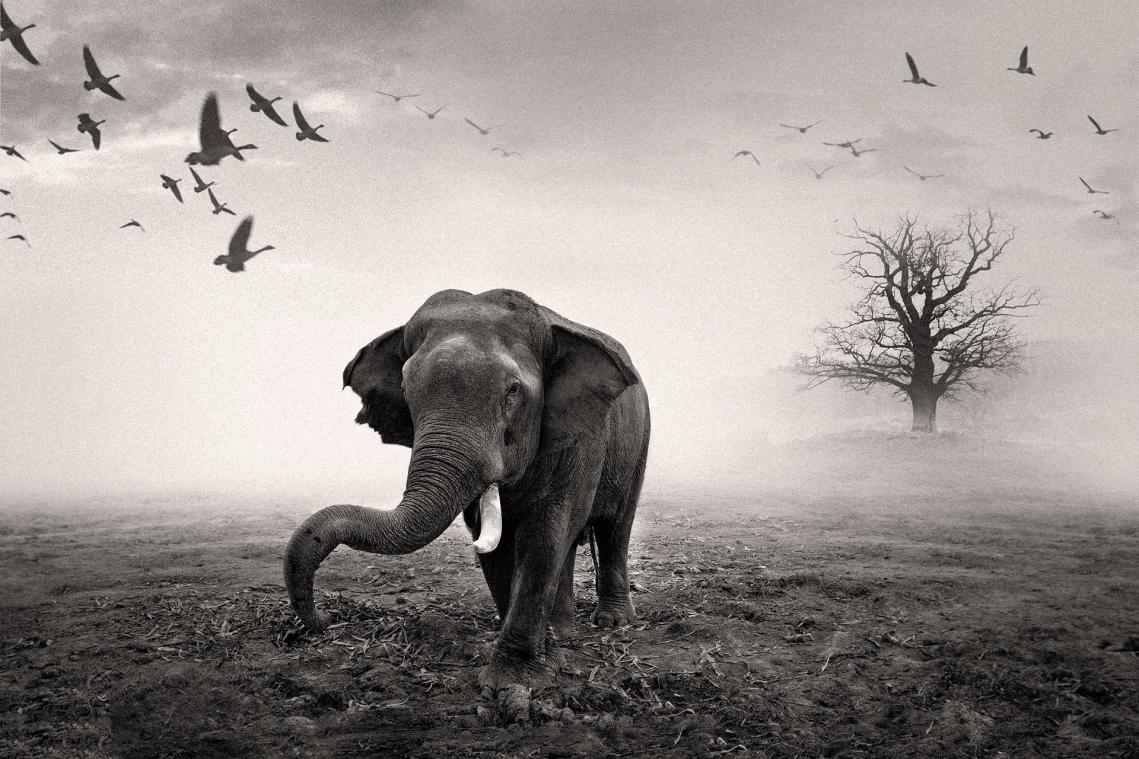 _MG_9411_elefant